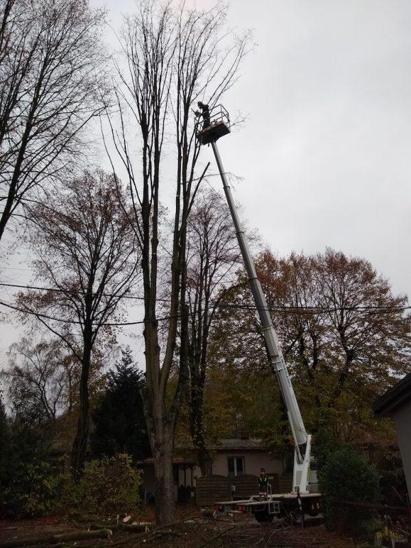 Baumpflege Hubwagen