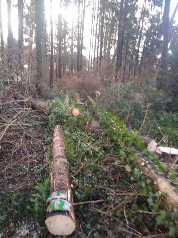 Waldforstarbeiten