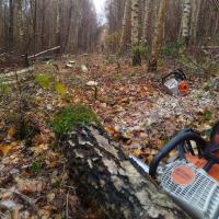 Forstarbeiten